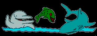 Metáfora do Golfinho, da Carpa e do Tubarão